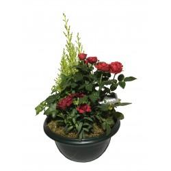 Coupe de Plantes Fleuries - Place O Fleurs
