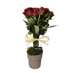 Composition de Roses rouge - Place O Fleurs